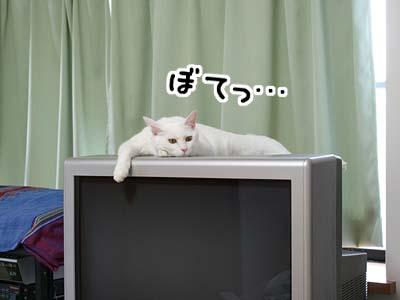 cat531