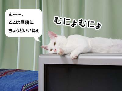 cat532