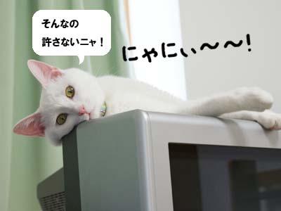 cat533