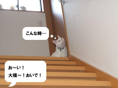 cat534