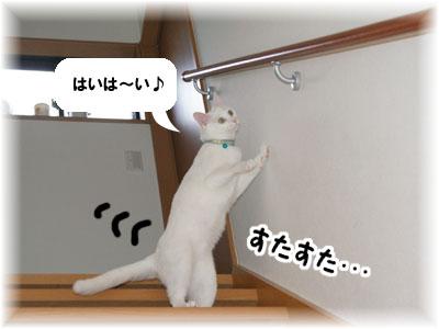 cat535