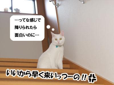 cat536