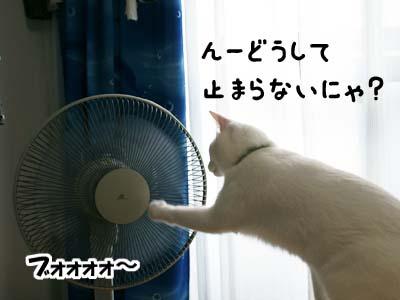 cat540