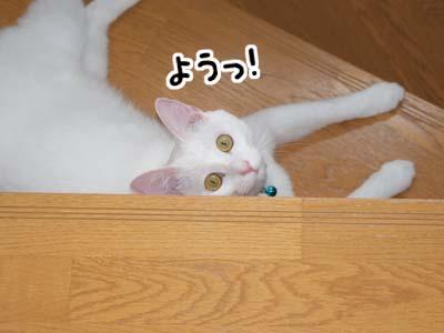 cat542