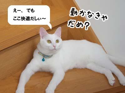cat543