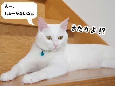 cat544