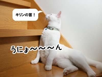 cat545