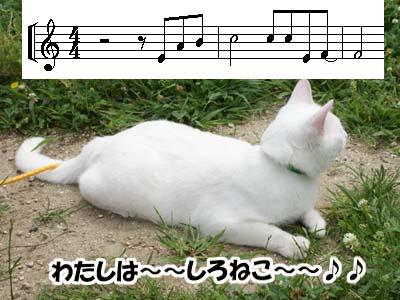 cat547