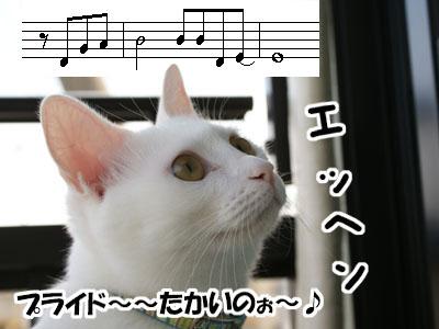 cat548