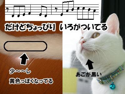 cat549