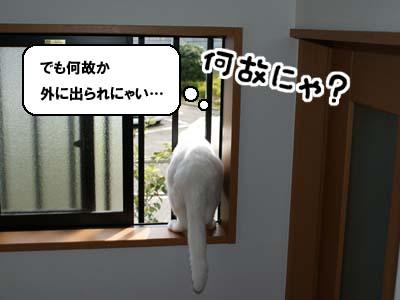 cat551