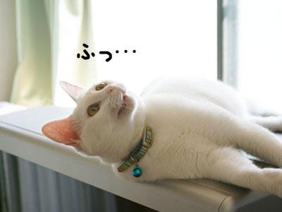cat556