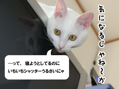 cat559