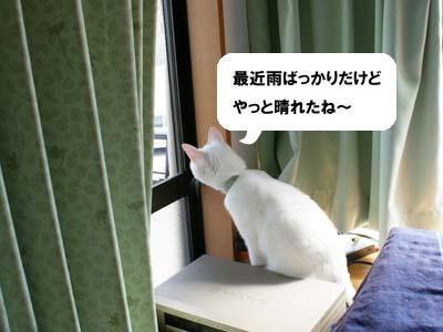 cat560
