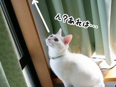 cat561
