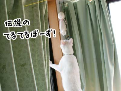 cat562