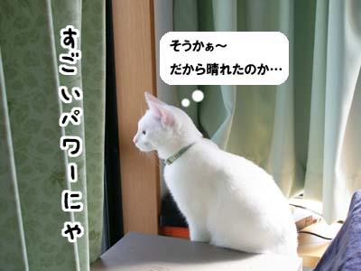 cat563