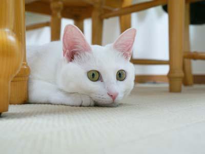 cat564