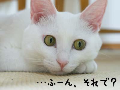 cat565