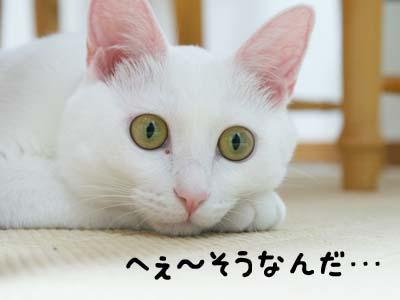 cat566