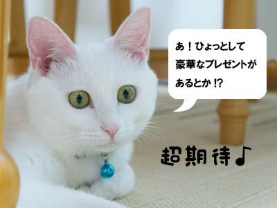 cat567