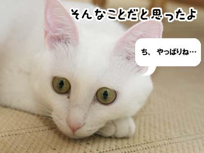cat568