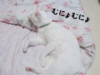cat569