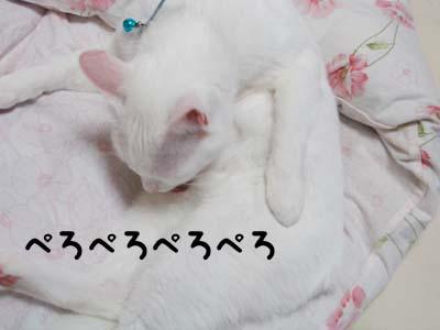 cat571