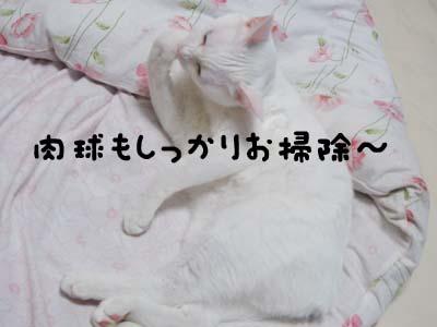 cat572