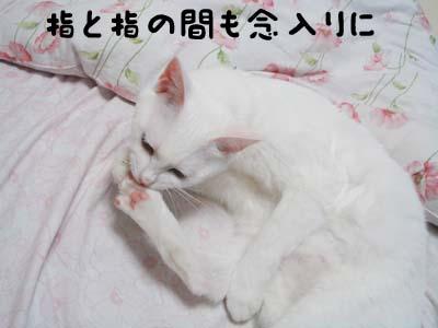 cat573