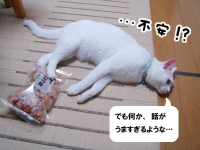 cat577