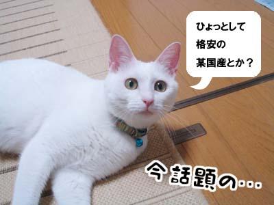 cat578