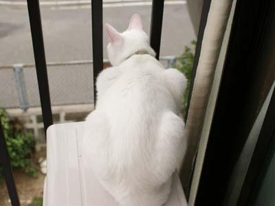 cat581