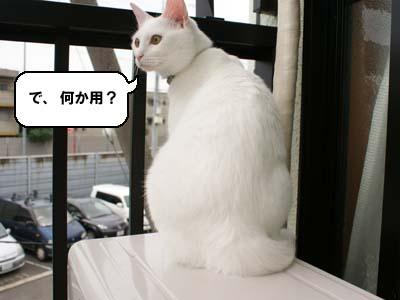cat582