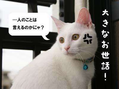 cat585