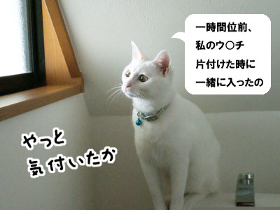 cat587