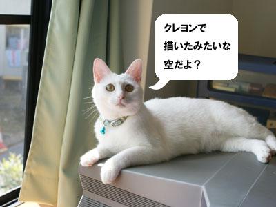 cat589