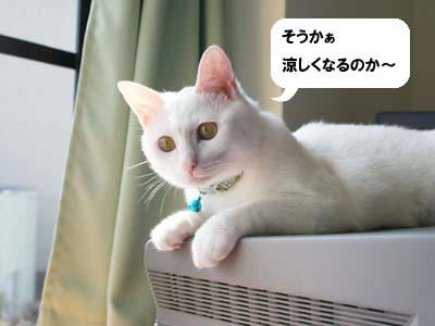 cat590