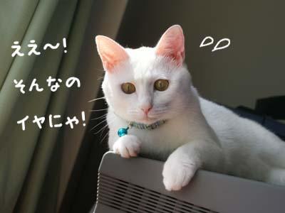 cat591