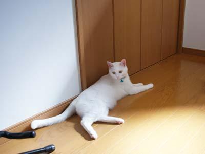 cat593