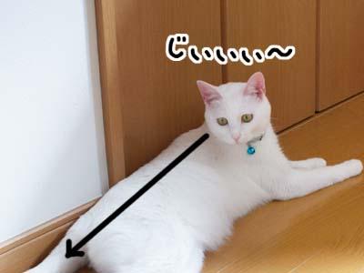 cat594