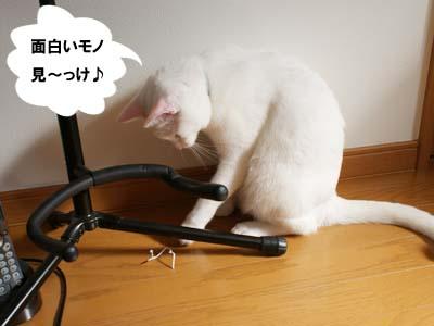 cat596