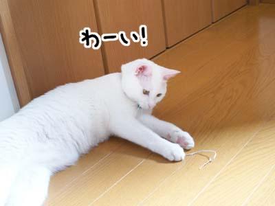 cat597