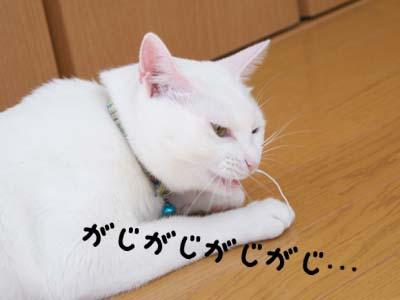 cat598