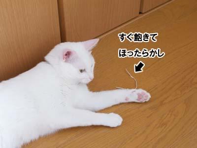 cat599