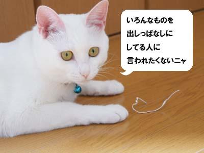 cat600