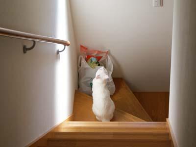 cat601