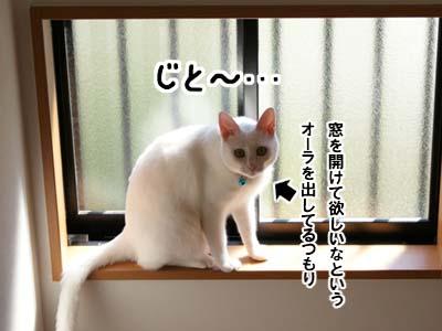 cat603