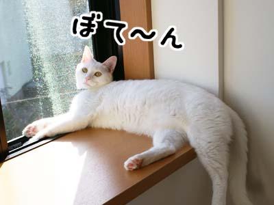 cat606