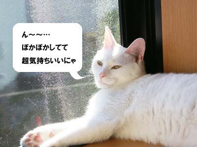 cat607